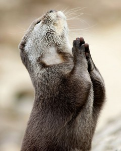 Praying Otter x menobsessed26 29179956 2048 2560 240x300 How Do You Sell A House?