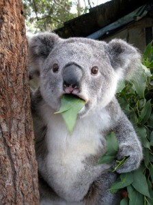 koala shock funny 224x300 OMG: This Is A MAJOR Major Works Bill!!!