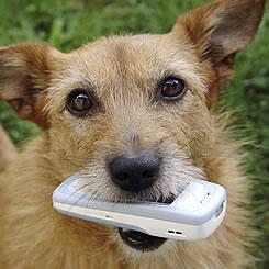 dog holding phone